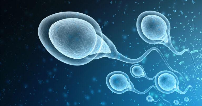 Evolution of Sperm